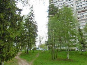 Зеленый двор 11 микрорайона Зеленограда
